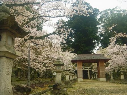 やはり神社というのは独特の雰囲気があり絵になりますね